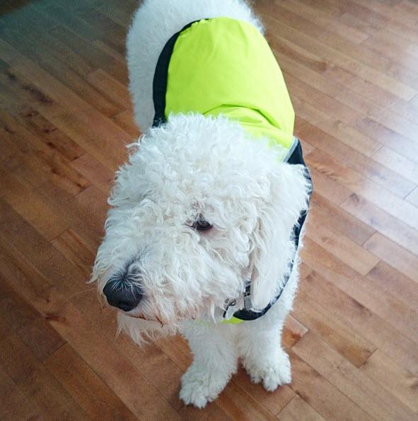 Jackets that Help Keep Dogs Cool | www.danslelakehouse.com