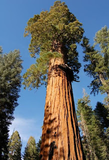 Sequoia Hyperion