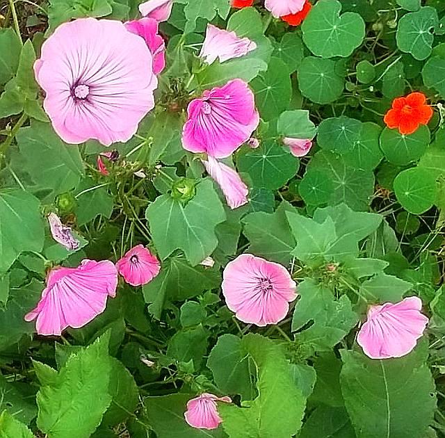 essbare Nutz- und Heilpflanzen