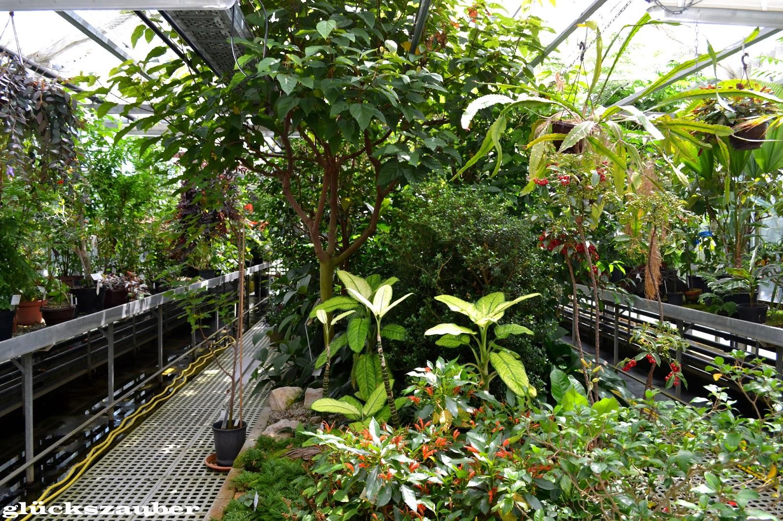 Pflanzen Regensburg