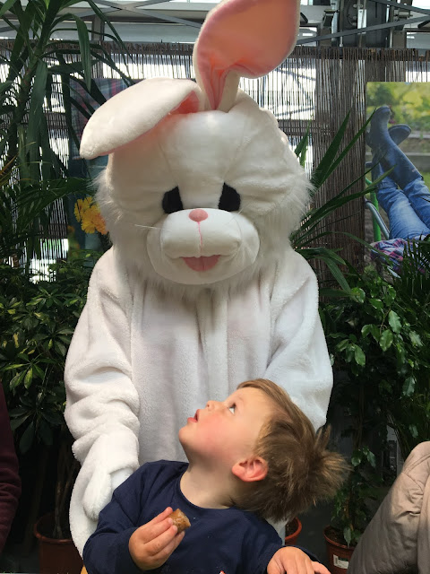 Easter Bunny Shropshire