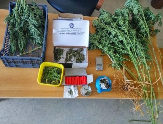Με αστυνομικό σκύλο η αστυνομία εντόπισε καλλιεργητή κάνναβης στην Αργολίδα