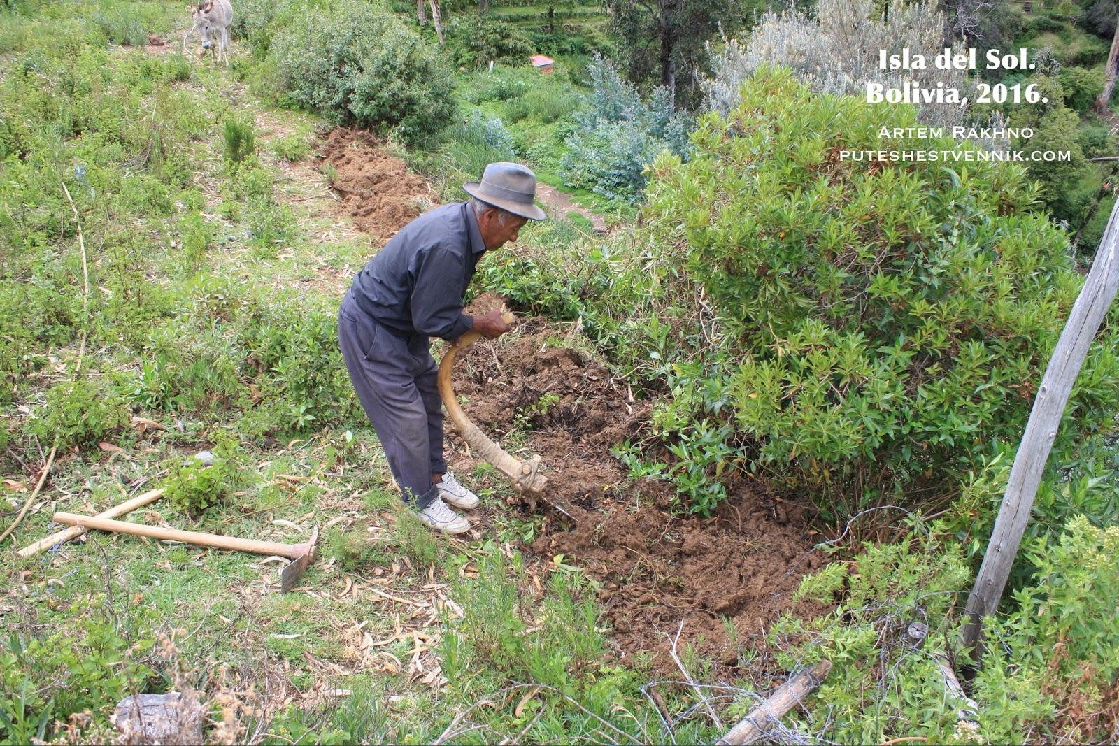 Боливиец вспахивает землю
