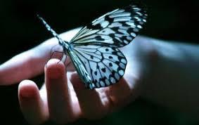 Kelebek Özellikleri