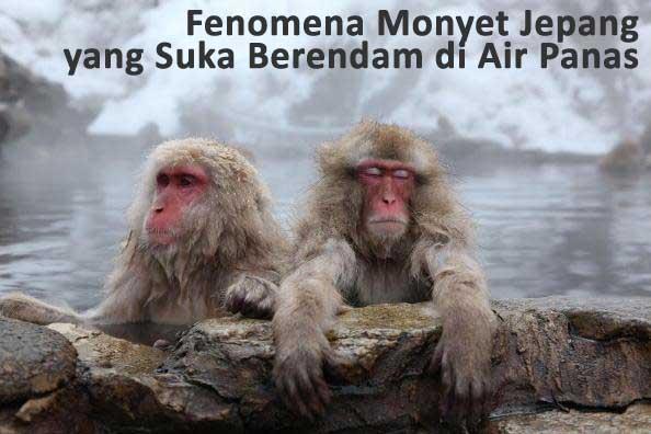 monyet jepang berendam di air panas