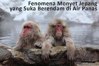 Monyet Salju Jepang Memang Suka Mandi Air Hangat