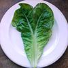 heart shpaed lettuce leaf