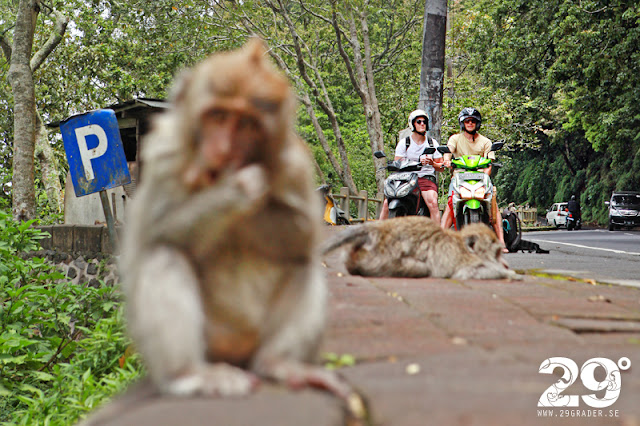 Dagens bilder: monkey-stop