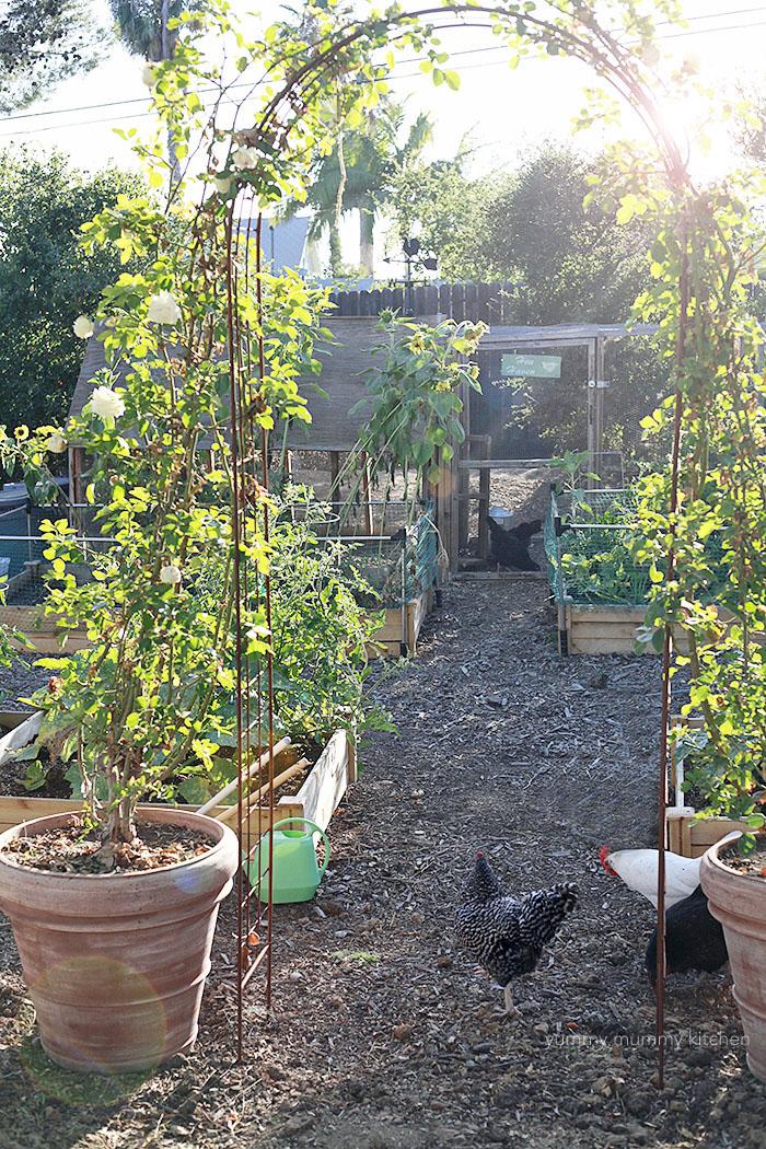 summer potager garden
