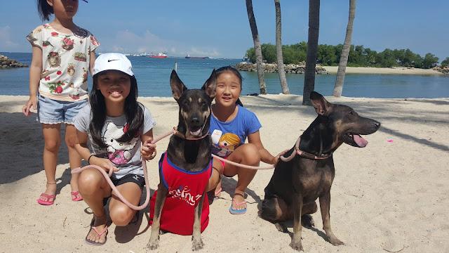 Dog adoption Pets Singapore