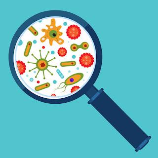 La Cosméteuse  le microbiome cutané le microbiote