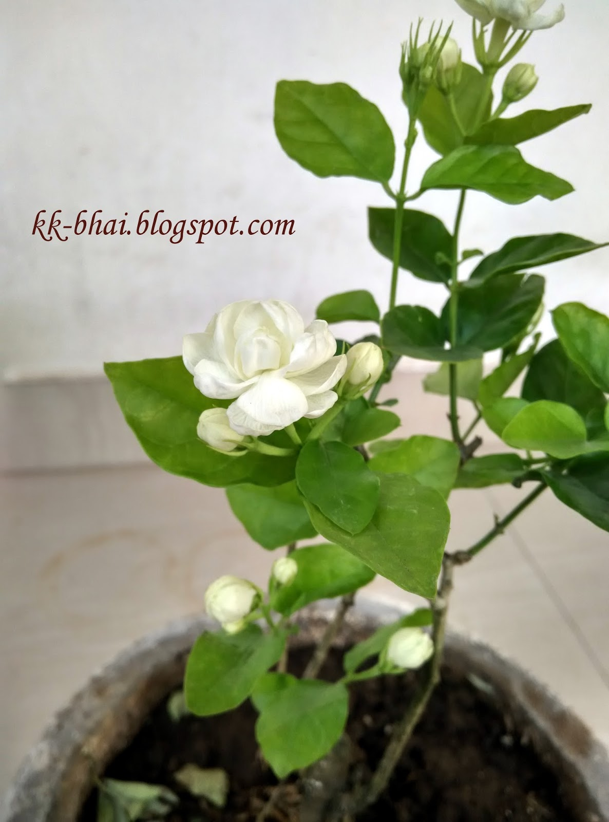 Puja Flowers And Other Things Used In Puja Hindu Worship
