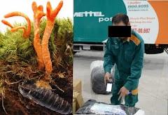 [PHỐT] Khách tố bị Viettel Post tráo hàng, xé nhãn khi gửi đông trùng hạ thảo