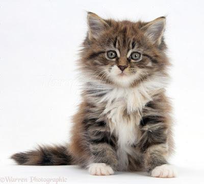 Cute Cats Kitty Pets 22