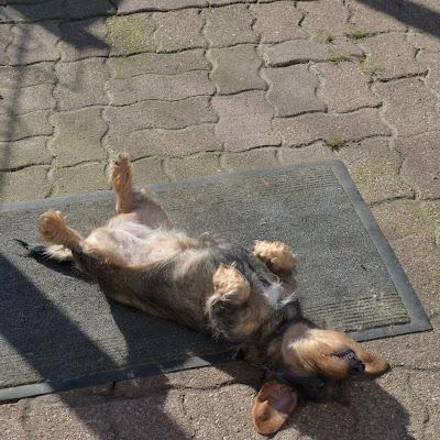 Garde chien val d'oise et Yvelines