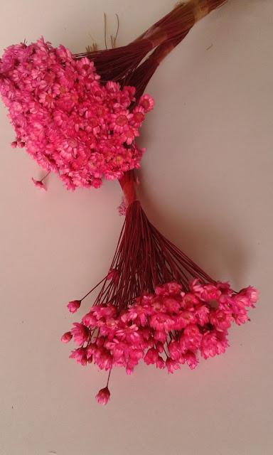 Sempre-vivas - flores que, além de outros usos, costumam ser usadas por alguns lojistas para simular uma floração natural dos mini-cactos e assim atrair compradores.