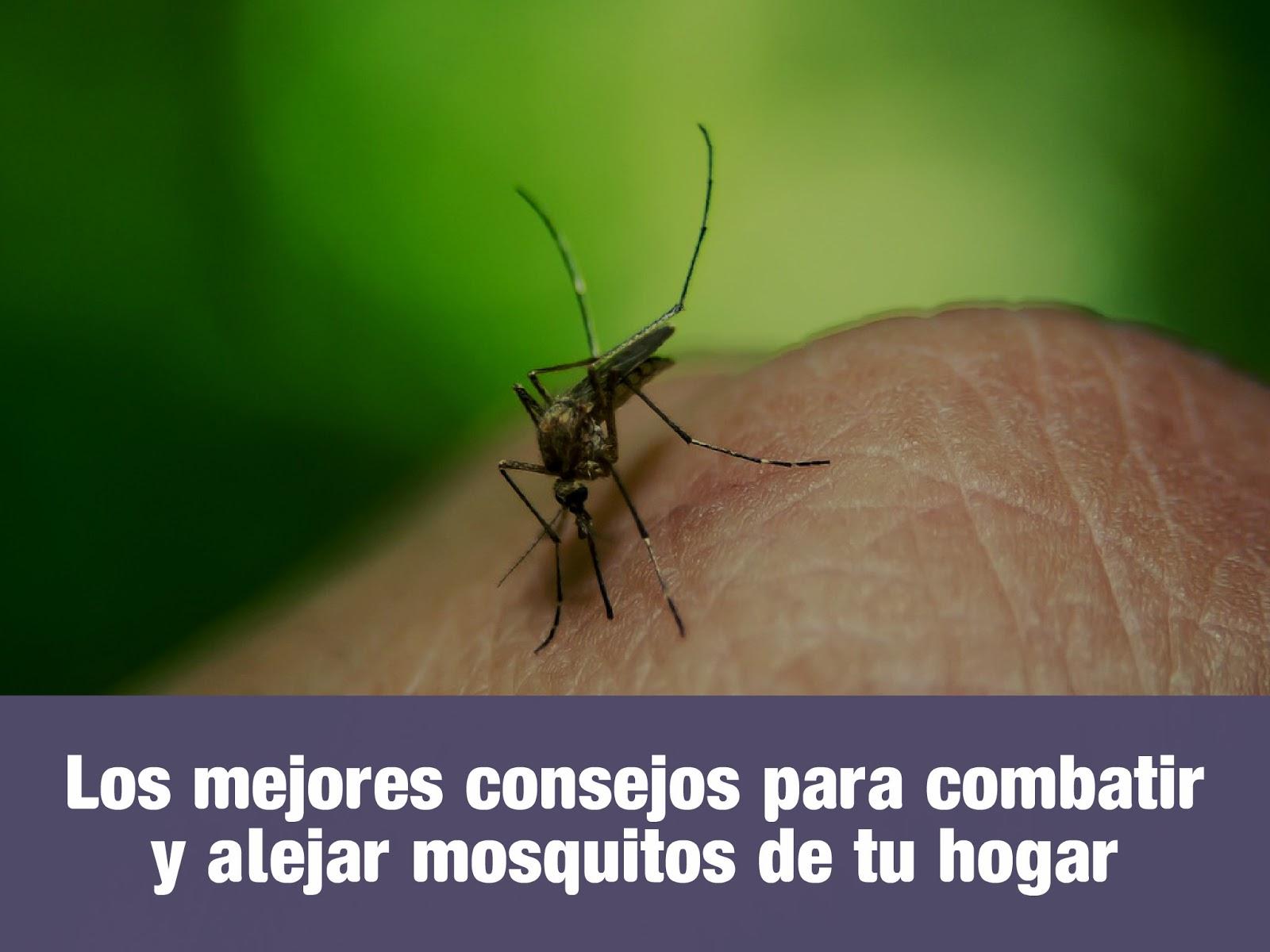 combatir-y-alejar-mosquitos-de-tu-hogar