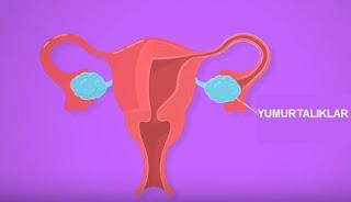 Fsh Hormonu Nedir? Normal Değeri ve Fsh Kaç Olursa Hamile Kalınır?