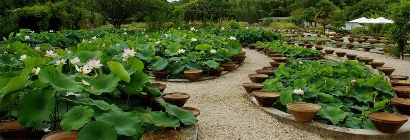 Latour-Marliac, el jardín de los nenúfares que inspiraron a Monet