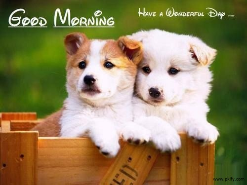 Good Morning HD Wallpaper With Two Cute Puppies