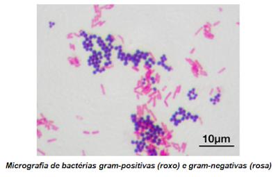 bactéria gram positiva negativa