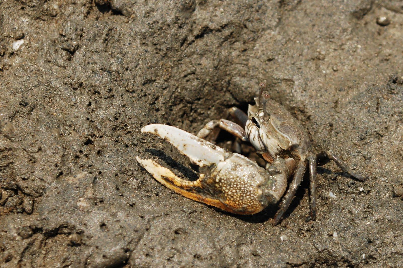 [臺灣-新竹][鐵道旅遊] 螃蟹、風車與夕照。風情海岸上的香山濕地