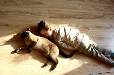 Nhà nuôi thú cưng thì có nên sử dụng sàn gỗ hay không?