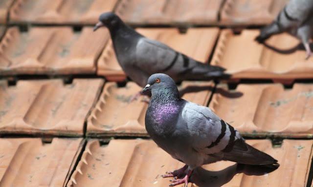 Control plagas aves Castellón