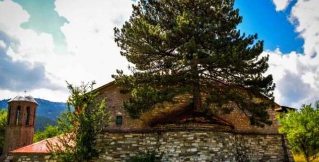 Δέντρο φύτρωσε μέσα στο ιερό εκκλησίας