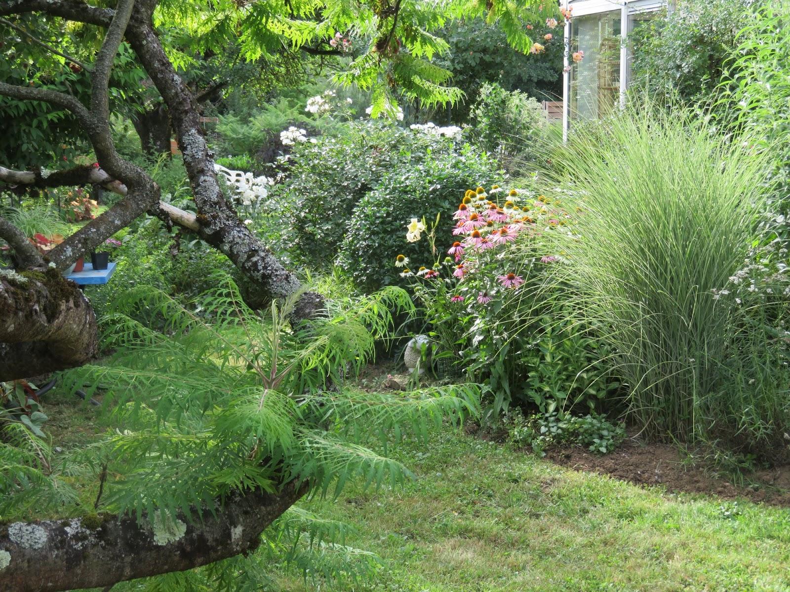 Mes motsdoubs mon jardin en juillet for Jardin 7 17 acapulco