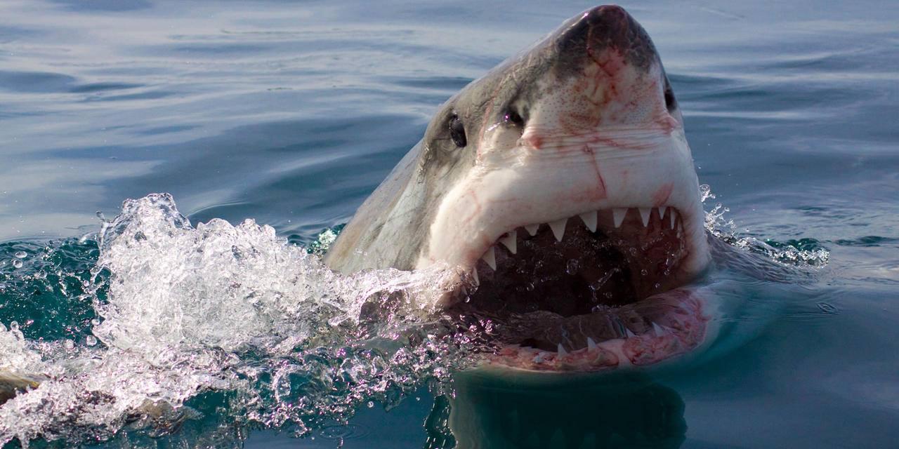наш сегодняшний картинки акул бизнеса и власти линч начинал