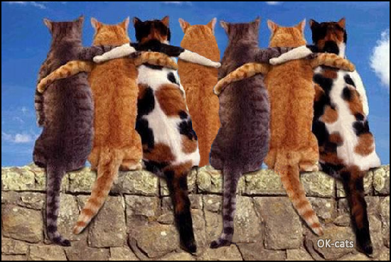 CATnipulation • Alone a cat is always strong, but 7 cats all together are much more  stronger!