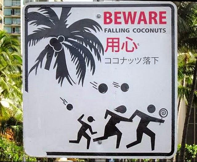 mortes bizarras, morto por coco