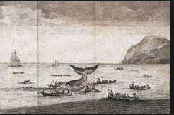 baleine autrefois