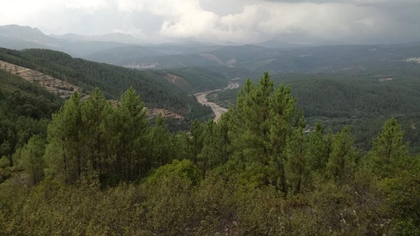 Pinhal visto do Miradouro da Sarnadela