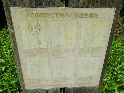 むろいけ園地 湿生花園で見られる湿生植物