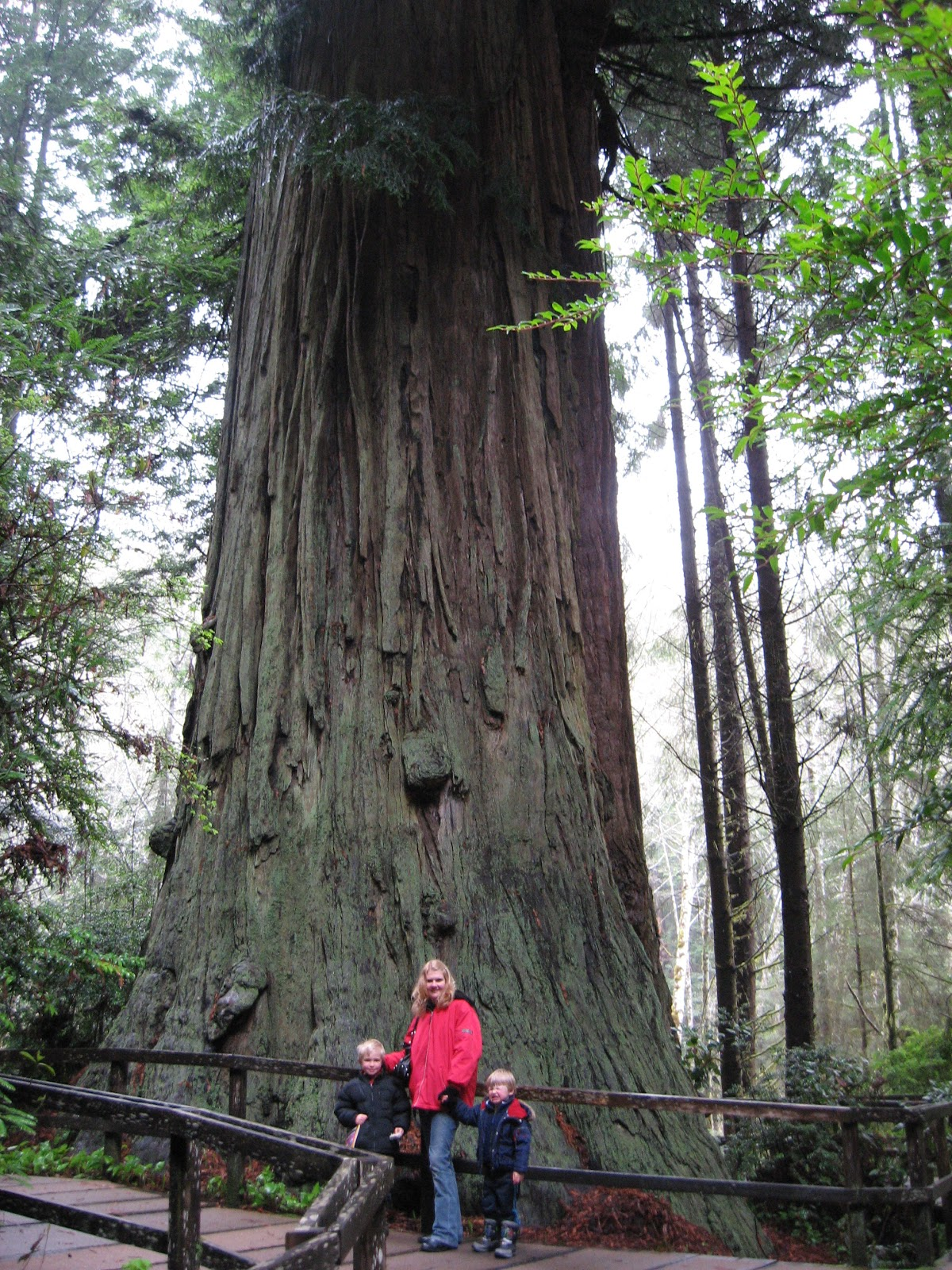Into The Wild Oregon Redwoods Not Oregon