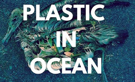 Sea Wildlife And Plastic. How Are They Related?