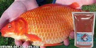 Umpan Pelet Ikan Mas Kilo Gebrus