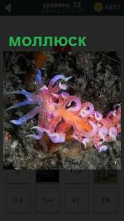 В воде один из видов морепродуктов моллюск плывет по своим делам