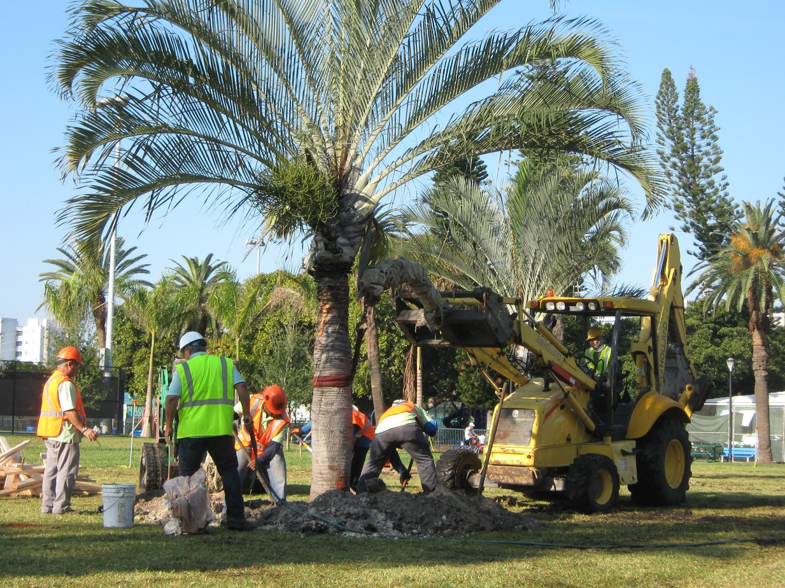 Palm-tree-removal-Perth