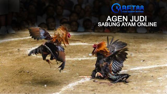 Agen Judi Sabung Ayam Online (Live Streaming)