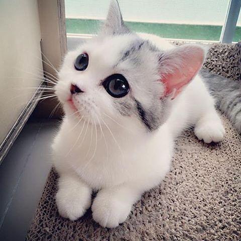 Cute Cat Image for Whatsapp