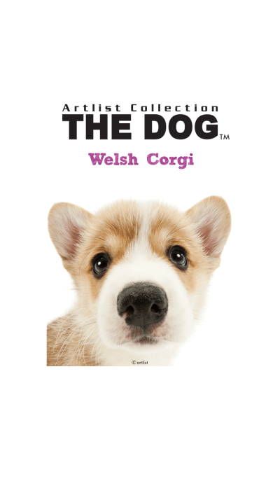 THE DOG Welsh Corgi