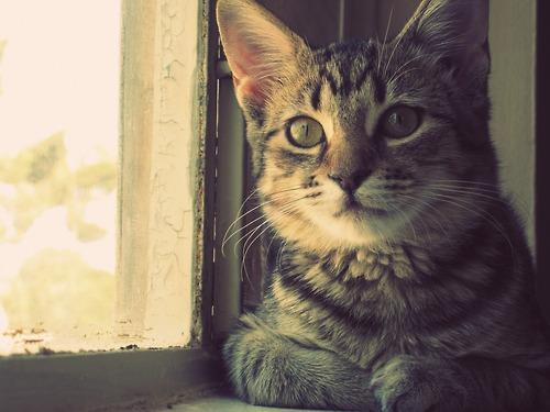 gato tumblr