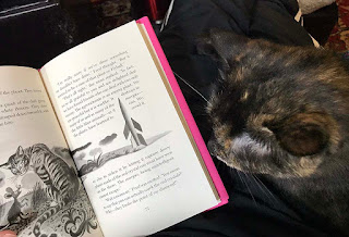 #cats #catbooks