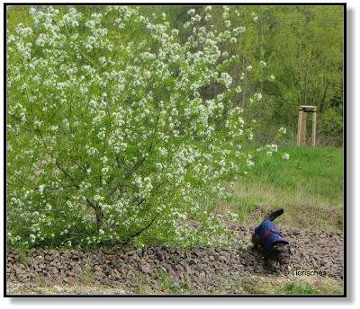 Lotte und der blühende Baum