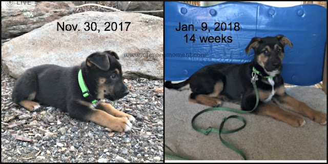 Puppies grow so fast!