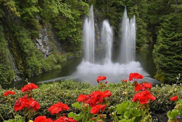 Flores Paisagens E Imagens Lindas