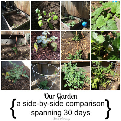 our garden a 30 day comparison